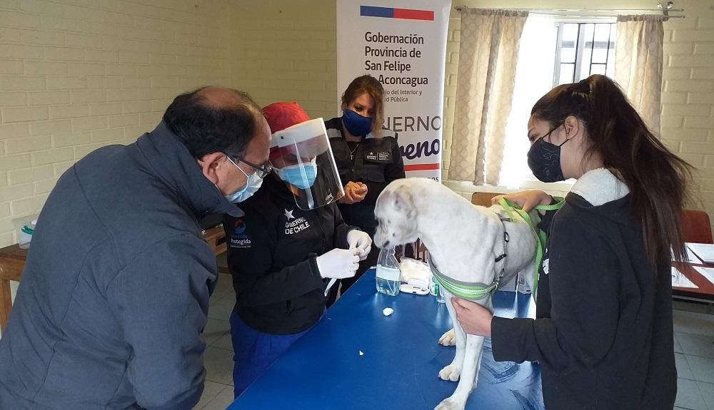 Programa Veterinario en Terreno ofrece desparasitación y microchip de identificación para cerca de 2 mil mascotas