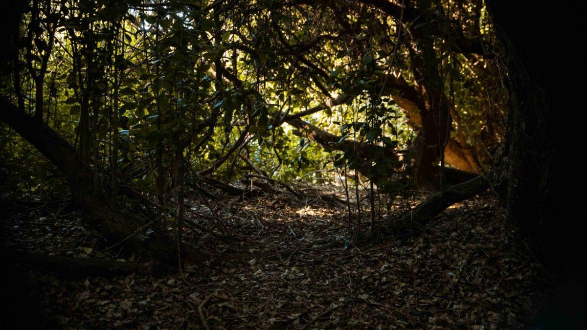 Quintero: Santuario Bosque Las Petras contará con un plan de manejo para su protección