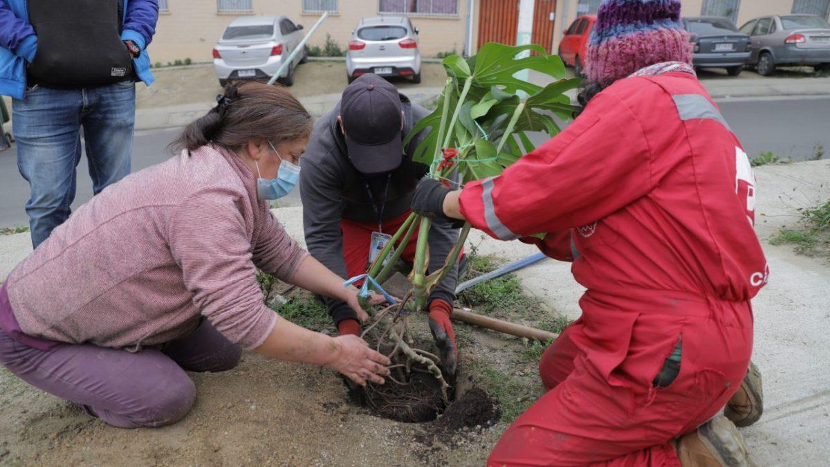 Alcaldía Ciudadana comenzó proceso de arborización nativa en distintos cerros de Valparaíso