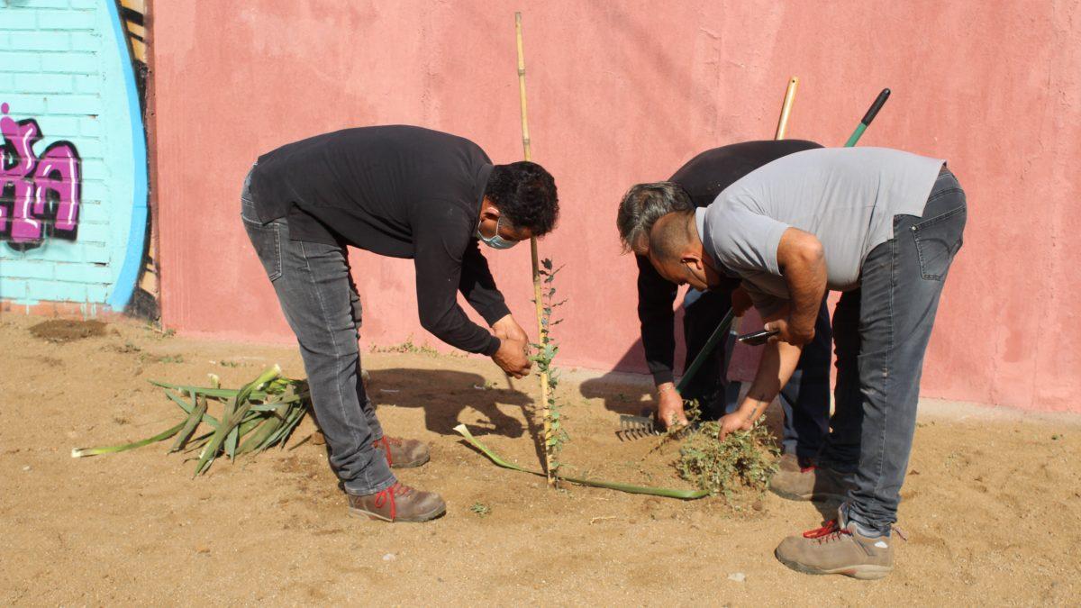 Municipio de Llay Llay declara Estado de Emergencia Climática y Ecológica en la comuna
